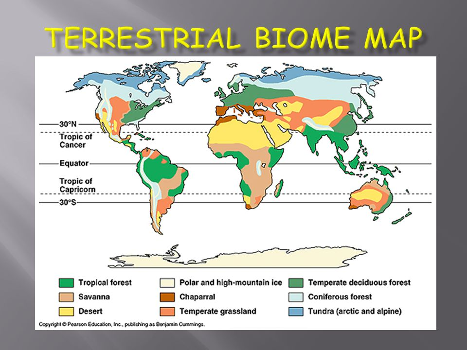 Biomes ppt video online download 7 terrestrial biome map gumiabroncs Gallery