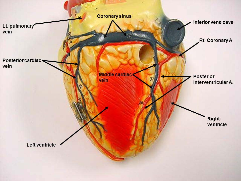 Brachiocephalic trunk Left common carotid artery Left ...