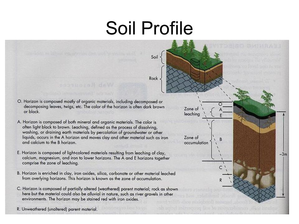 Soil botanicals pg other trace evidence that may be for Soil profile definition