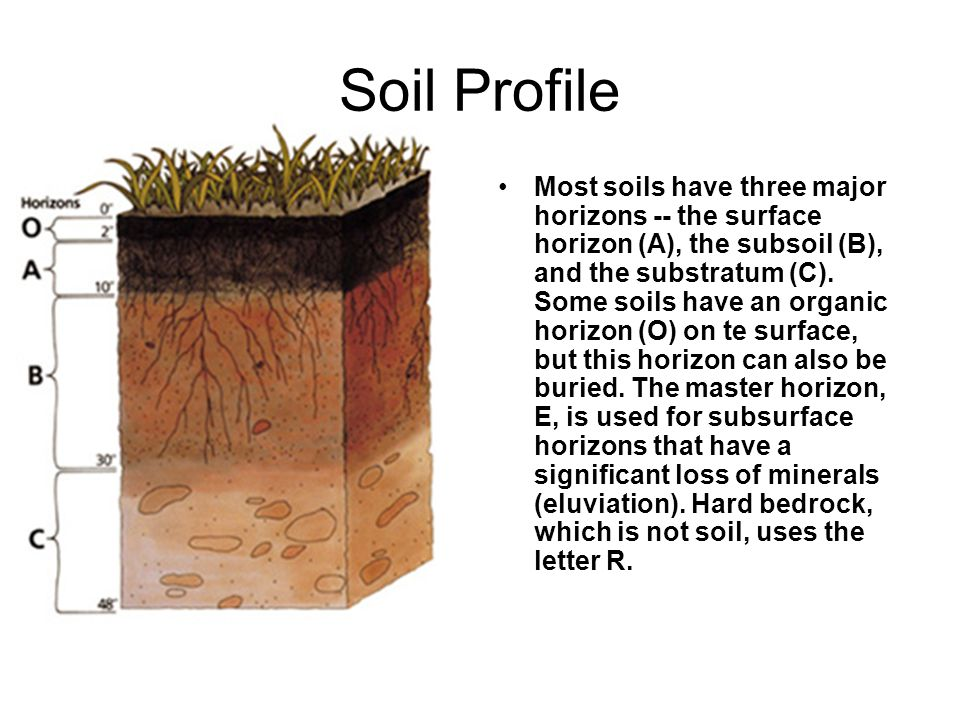 Soil botanicals pg other trace evidence that may be for Soil 5 letters