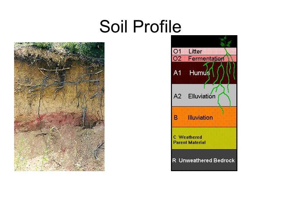 Soil botanicals pg other trace evidence that may be for Soil 8 letters