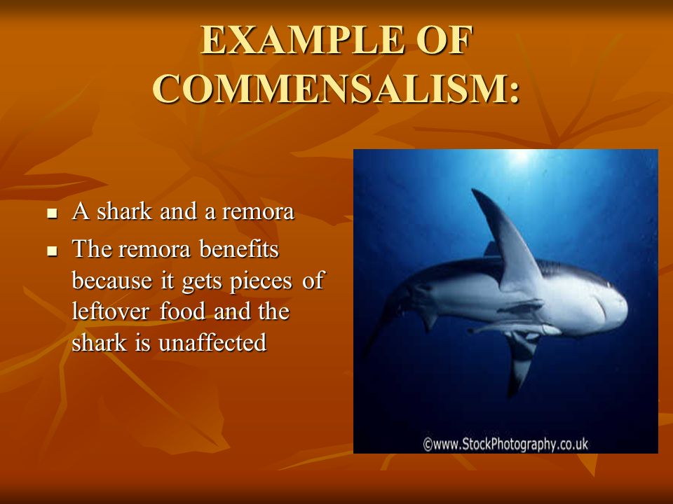 commensalism and mutualism relationship examples