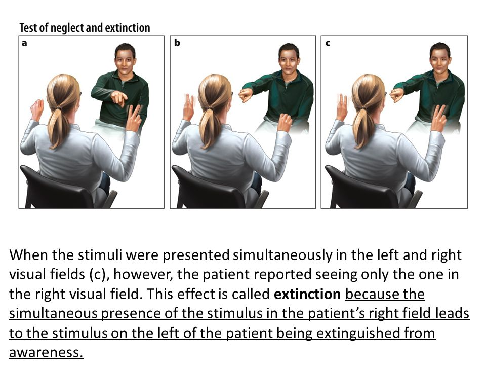 the effect of visual stimuli on Effects of isual and auditory stimuli 201 response keys the participant then performed several practice trials the first session determined the baseline performance.