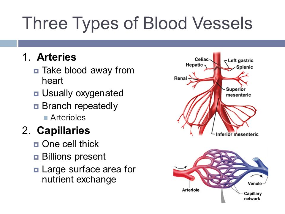Blood Vessels & Circulation - ppt download