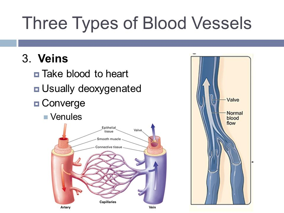 Funky Blood Vessels And Circulation Collection - Human Anatomy ...