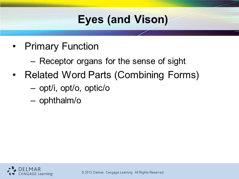 Special Senses: The Eyes and Ears - ppt video online download