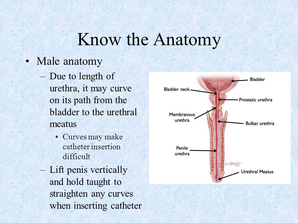 Female Anatomy Catheter Insertion