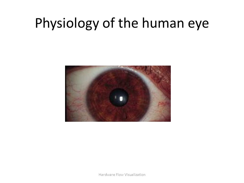 Physiology of the human eye - ppt download