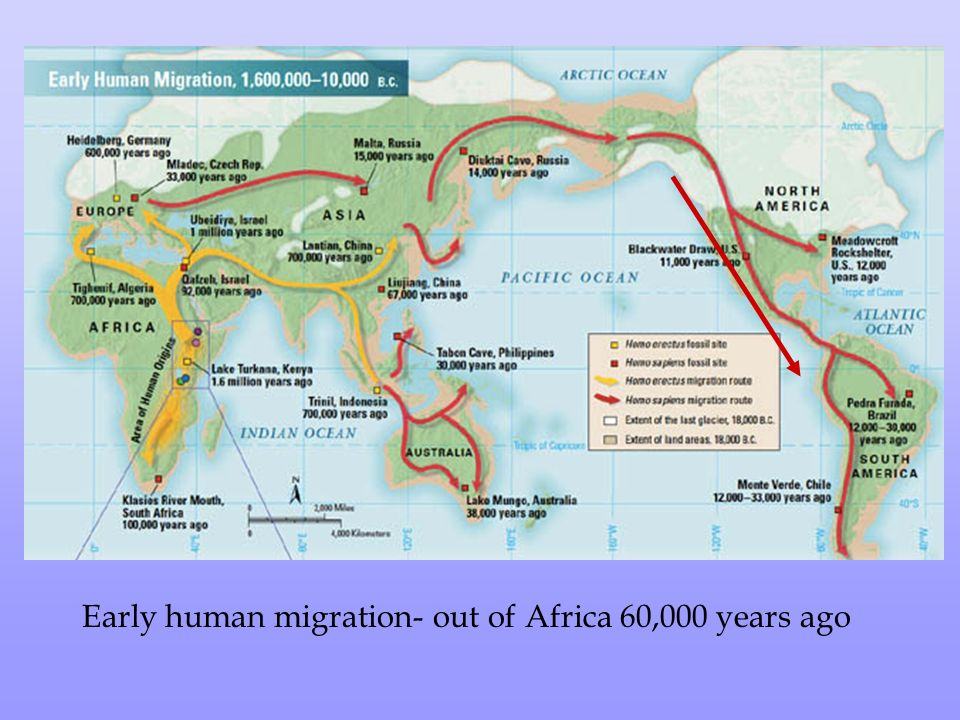 Out of Africa: How early humans first got to Europe