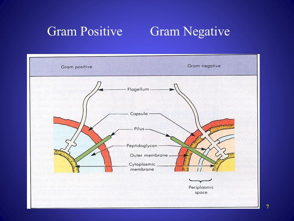 Gram positive gram negative bacteria ppt download 7 gram positive gram negative ccuart Image collections