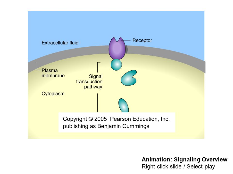 The three stages of cell signaling a preview ppt download animation signaling overview ccuart Image collections