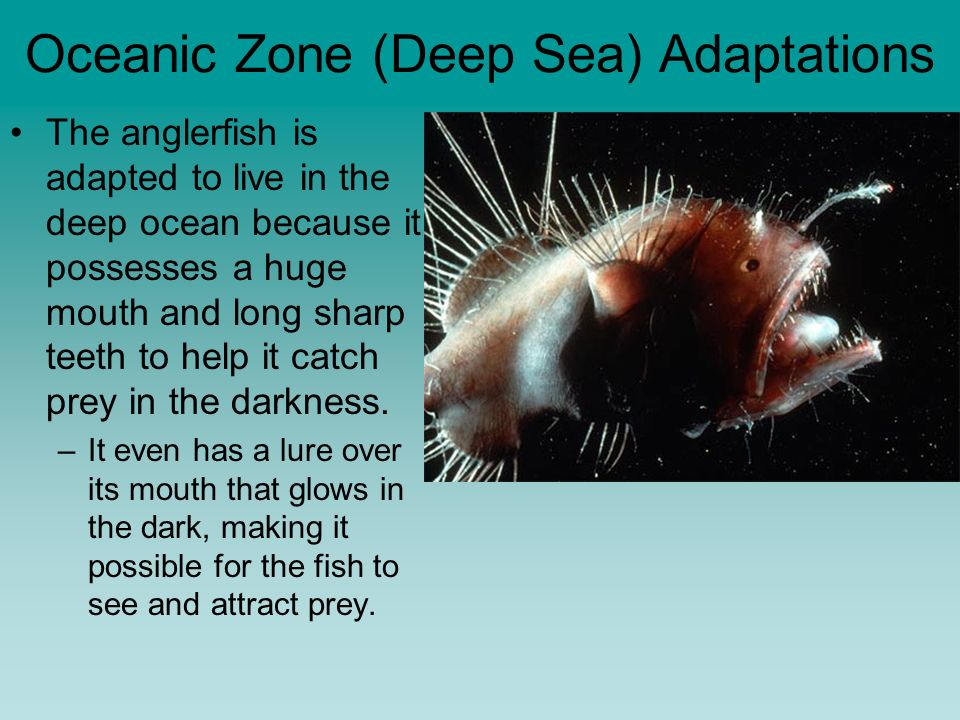 deep sea adaptations essay Deep sea creatures & adaptations this essay deep sea creatures & adaptations and other 63,000+ term papers, college essay examples and free essays are available now on reviewessayscom.
