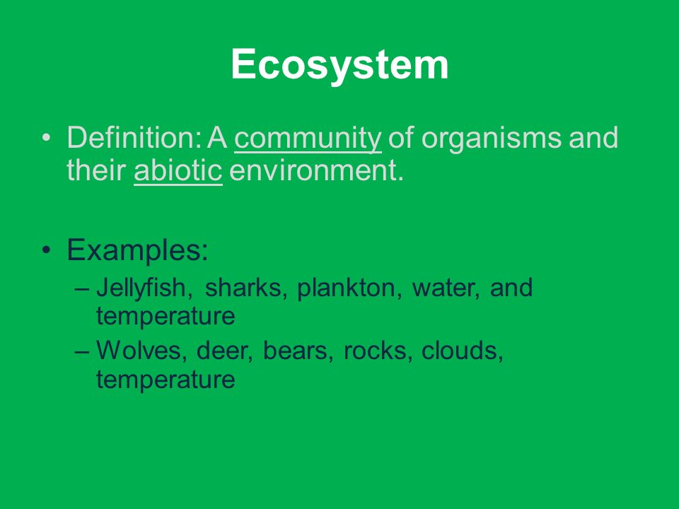 Ecosystems (Part 1) Notes