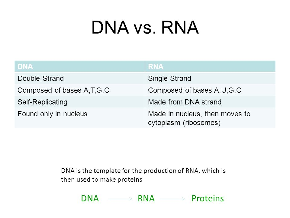 dna and rna worksheet Termolak – Dna and Rna Worksheet