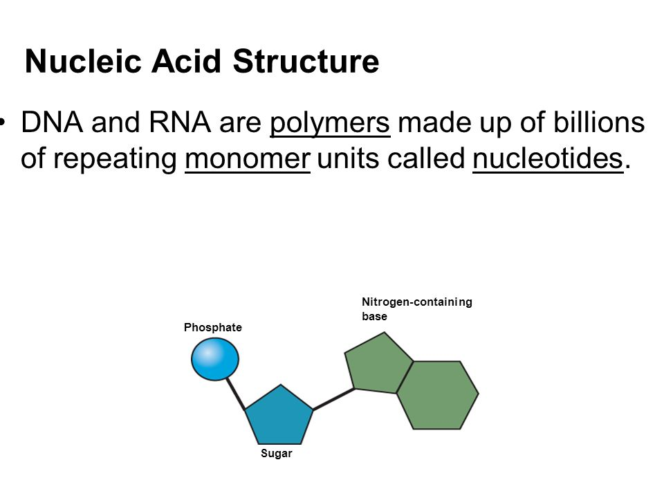 structure and roles of nucleic acids Nucleic acid types the two main types of nucleic acids in your body are called deoxyribonucleic acid, dna, and ribonucleic acid, rna there are several sub-types of rna, including messenger rna, mrna, transfer rna, trna, and ribosomal rna, rrna.