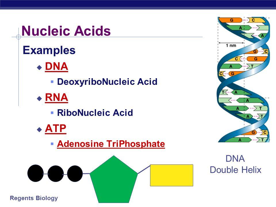 Nucleic Acids Examples Dna Rna Atp Deoxyribonucleic Acid Ppt Video