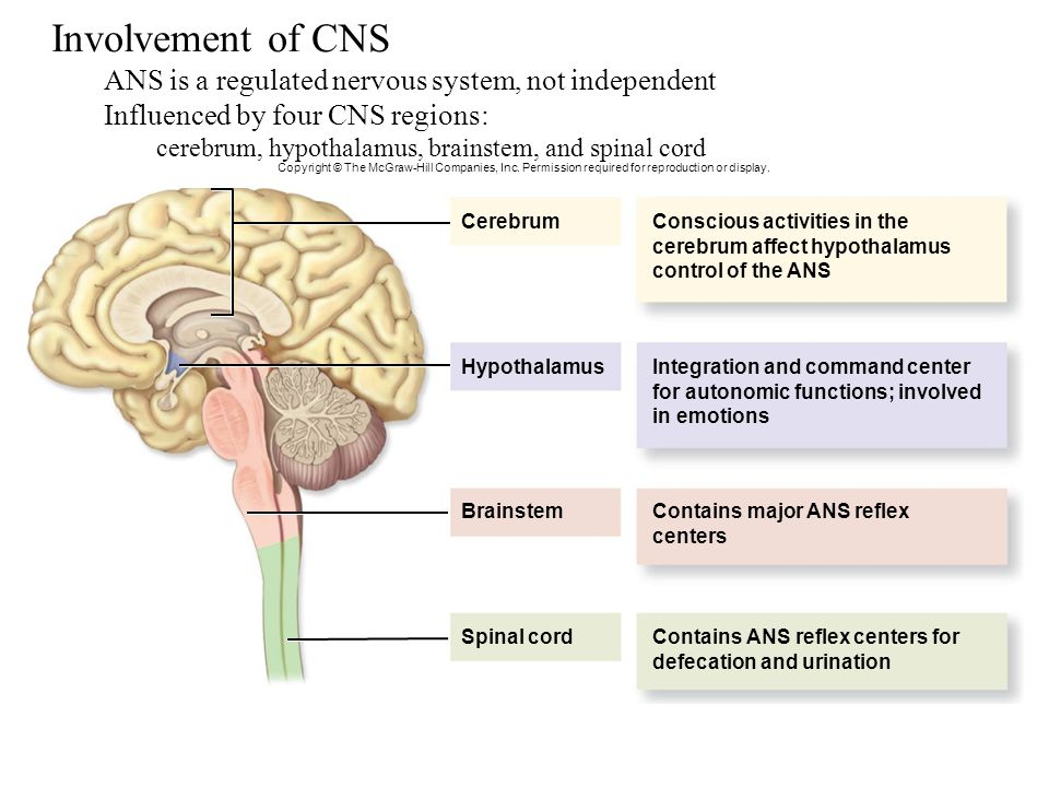 ch 14 autonomic system View notes - chapter 14-autonomic nervous system assignment from a&p 206  at southern state community college autonomicnervoussystemassignment.