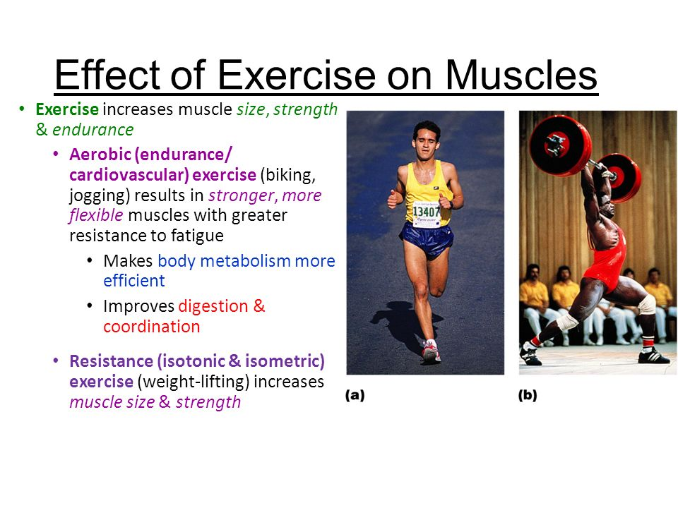 So How Do Skeletal Muscles KNOW how to or when to contract ...