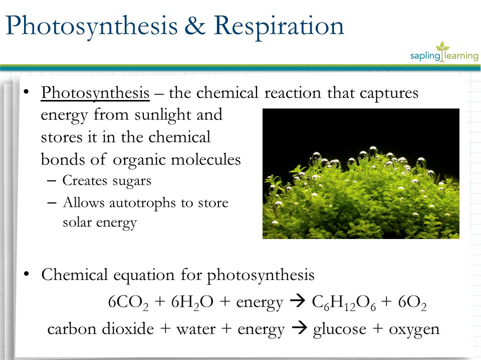 define photosythesis Define photosynthetic english dictionary definition of photosynthetic photosynthesis a sunlight is absorbed by chlorophyll in a leaf b carbon dioxide.