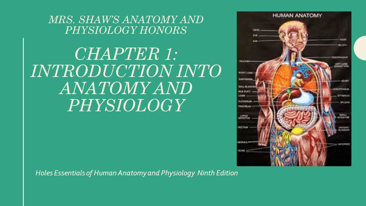 Holes Essentials of Human Anatomy and Physiology Ninth Edition - ppt ...