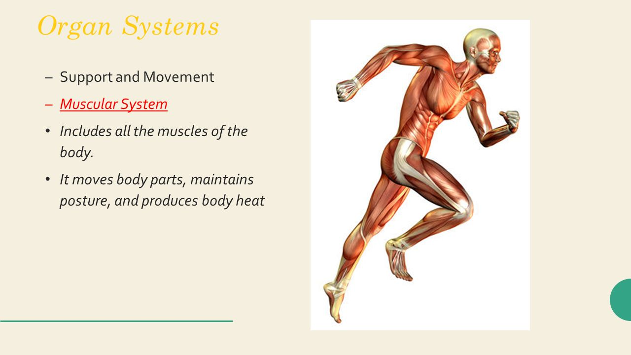 the muscular system btec anatomy and physiology task 2 Btec sport principles of anatomy and physiology in sport – know the structure and function of the muscular system introduction about 40% of your body mass is muscle, whose key function is to move yours bones.