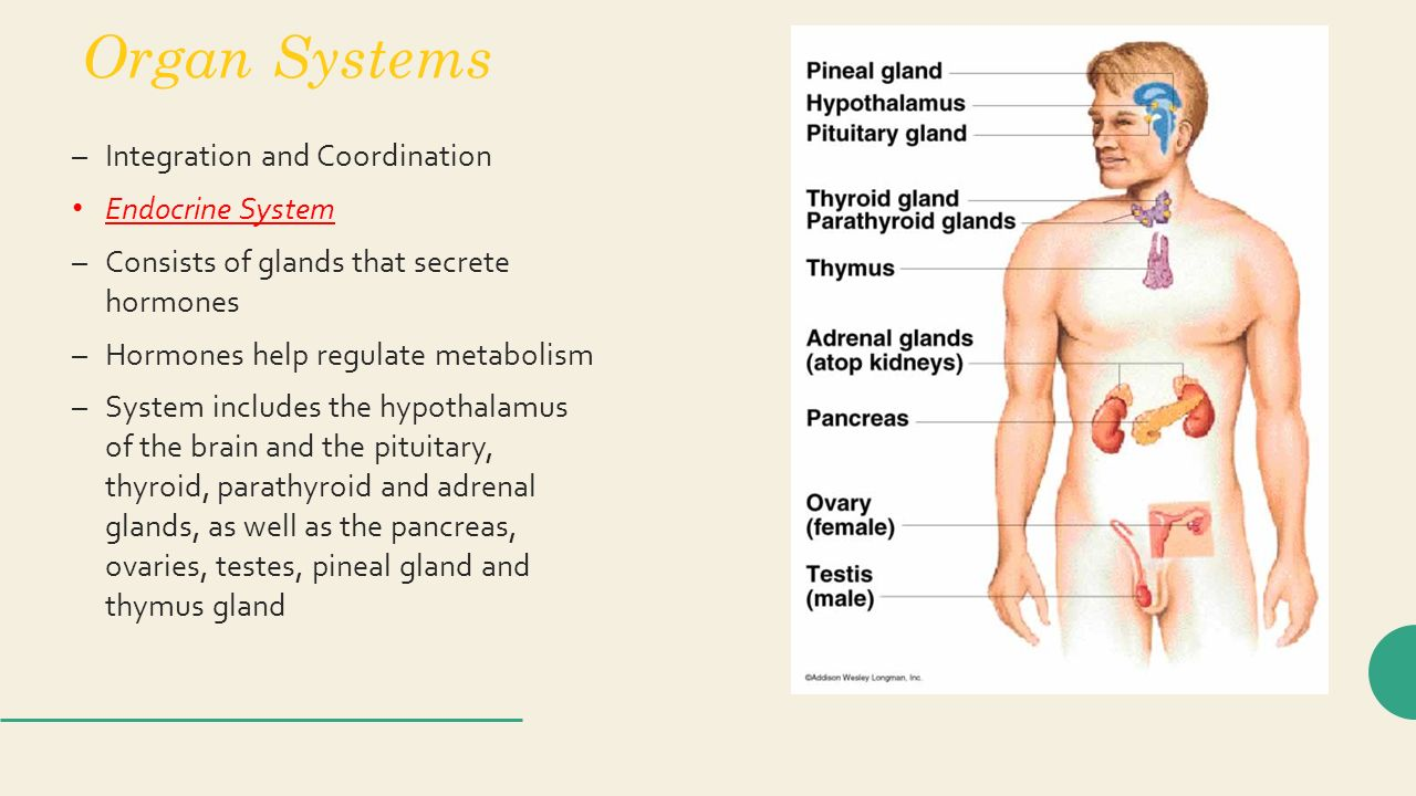 Exercise 42 anatomy of the reproductive system 4876179 - follow4more ...