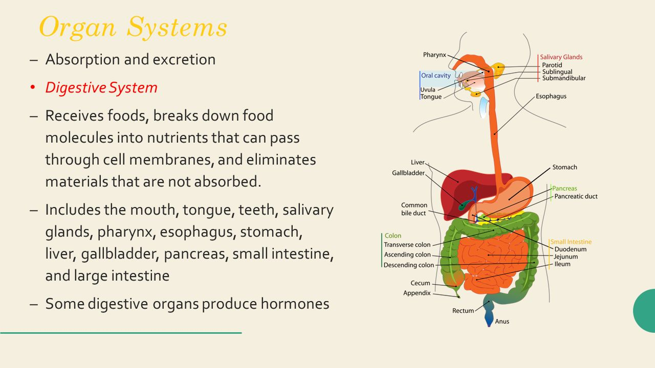 Which Organ Takes Nutrients From Food Into The Bloodstream
