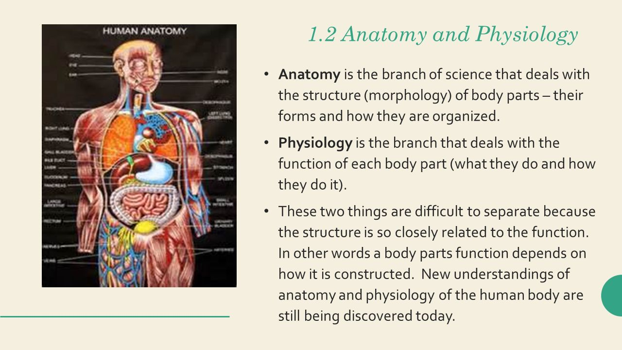 outline the anatomy and physiology of the human body in relation to the importance of correct moving Outline the anatomy and physiology of the human body in relation to importance of correct moving and positioning of individuals.
