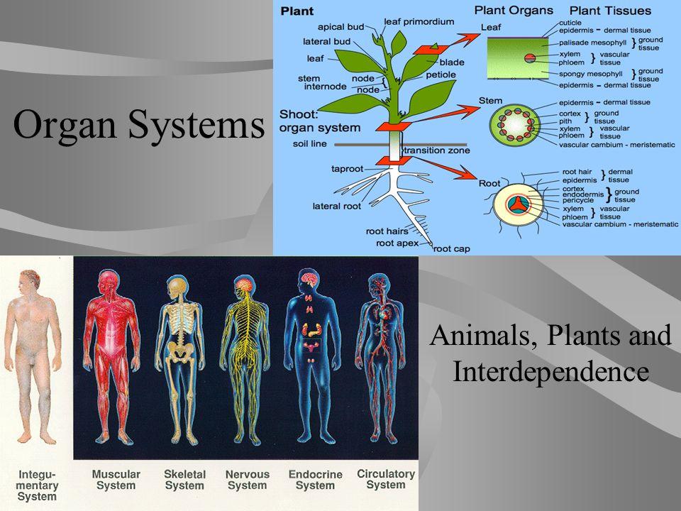 Plant organs diagram