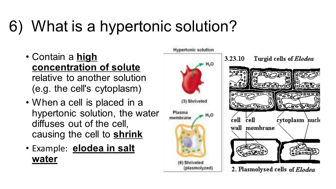 how to make hypertonic solution