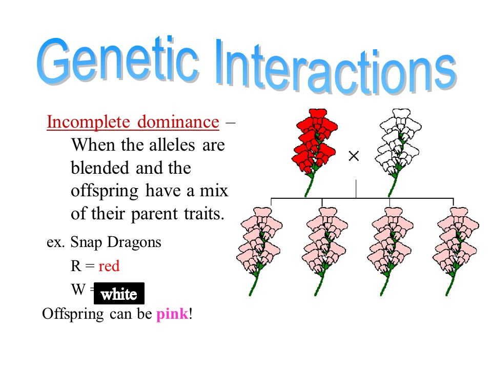 A Genotype Example