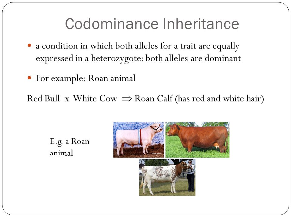other methods of inheritance codominance and incomplete