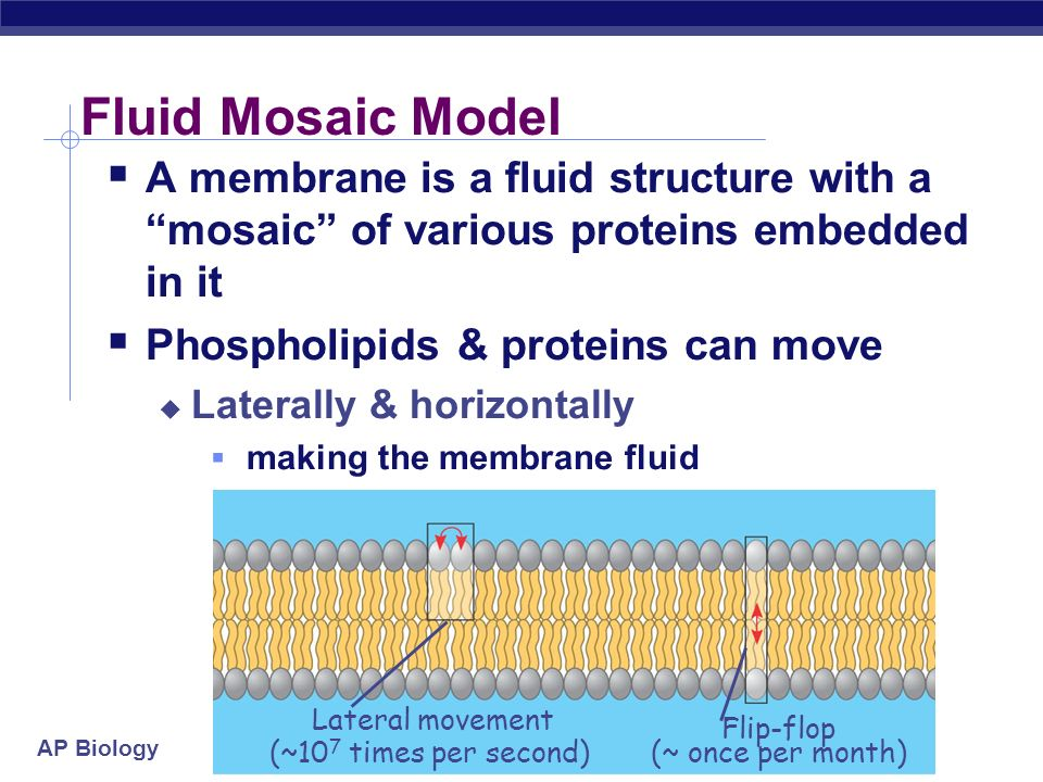 ap biology fluid mosaic model essay Multiple choice there are 60 questions on this the cell theory is one of the unifying themes of biology the fluid mosaic model describes the plasma.