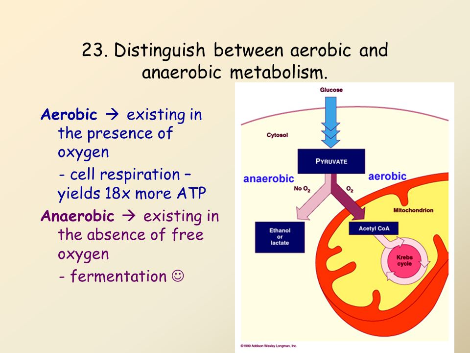 relationship between atp and metabolism