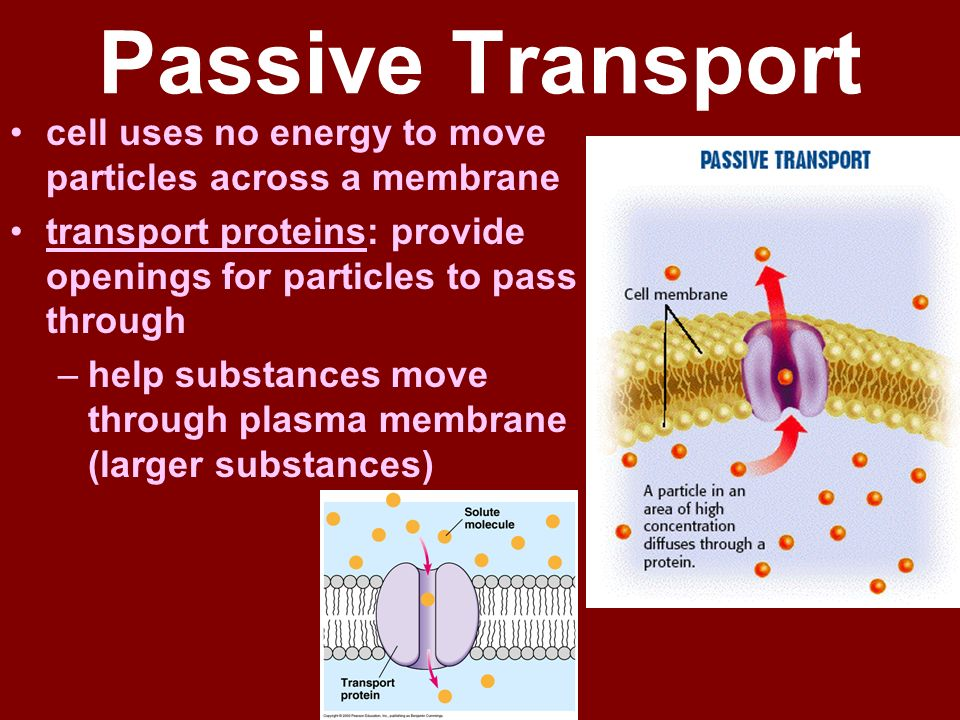 Chapter 7.3: Cell Transport - ppt download