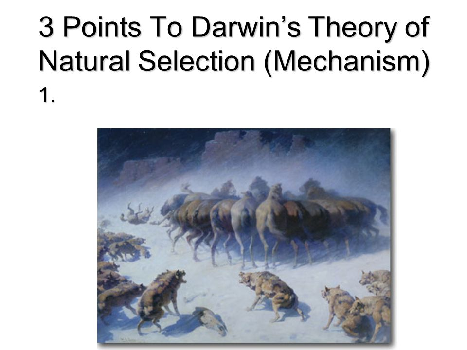 the two main points of darwins theory of evolution Scholars have usually given darwin's theory a neo-darwinian interpretation   when we examine the list of those great scientists who have  the danger of  darwin's ideas resides in the extraordinary way he used  darwinian evolution  had the goal of reaching a fixed end, namely man as a moral creature.