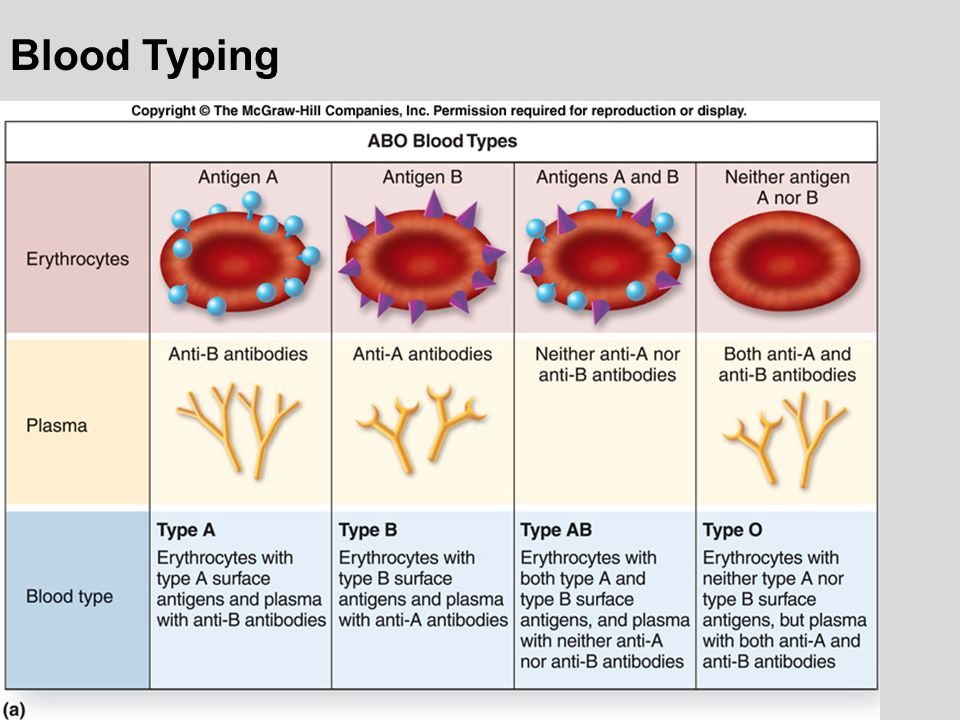 blood typing To say that transfusion medicine has an increasingly important role in the life support of critically ill patients is an under statement the knowledge that veterinary professionals have on companion animal transfusion therapy has drastically intensified since the first blood typing experiments were .