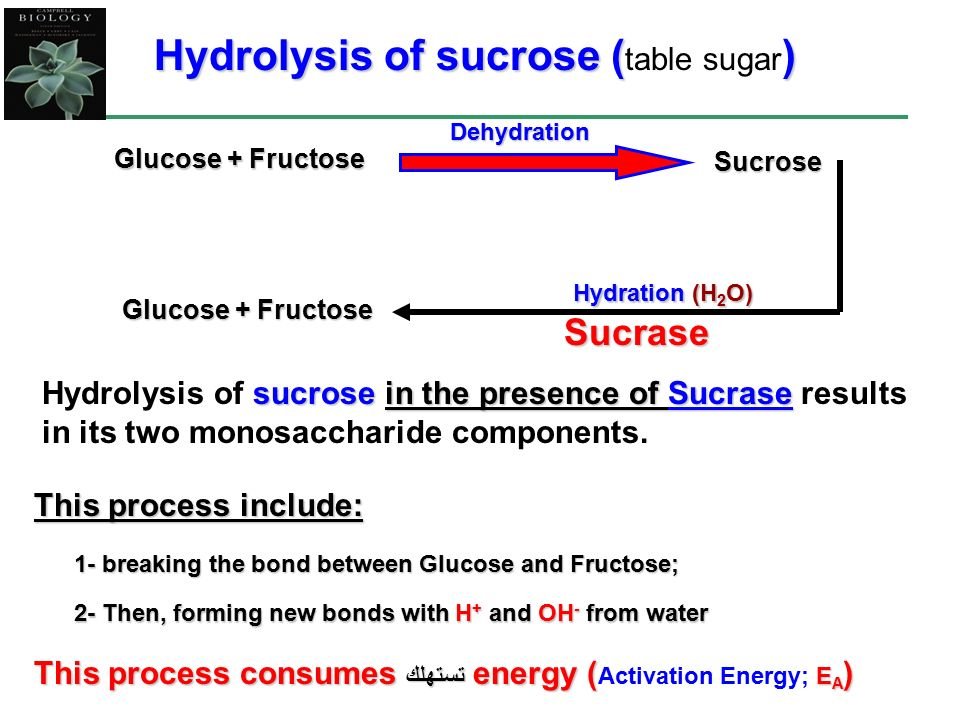 hydrolysis of sucrose Answer to the hydrolysis of sucrose to glucose and fructose is catalyzed by an enzyme call invertase.
