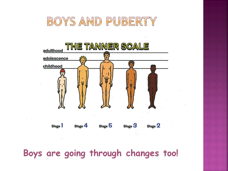 Male Development - Bodyteen