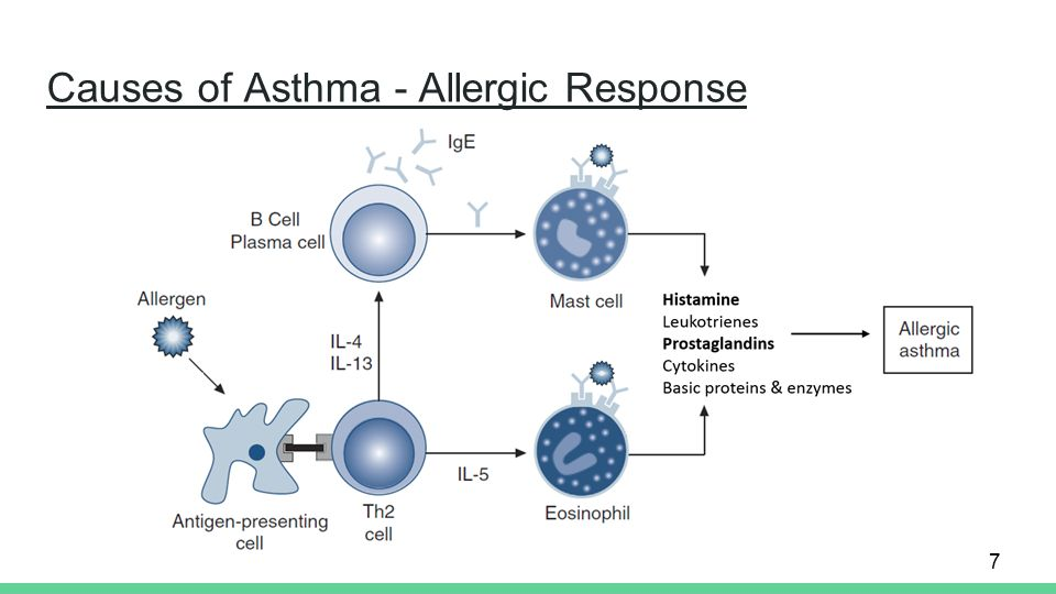 the biochemistry of asthma ppt video online download