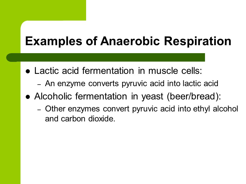 photosynthesis and cellular respiration ppt download