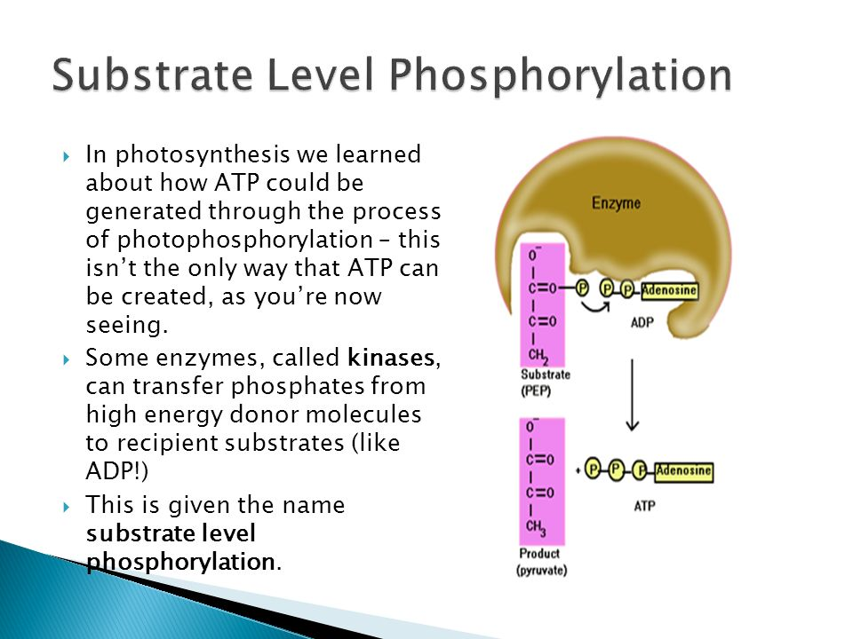 Substrate Level Phosphorylation Occurs When