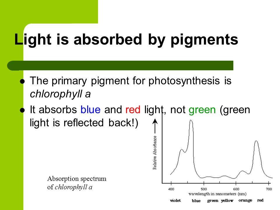 relationship between chlorophyll and accessory pigments