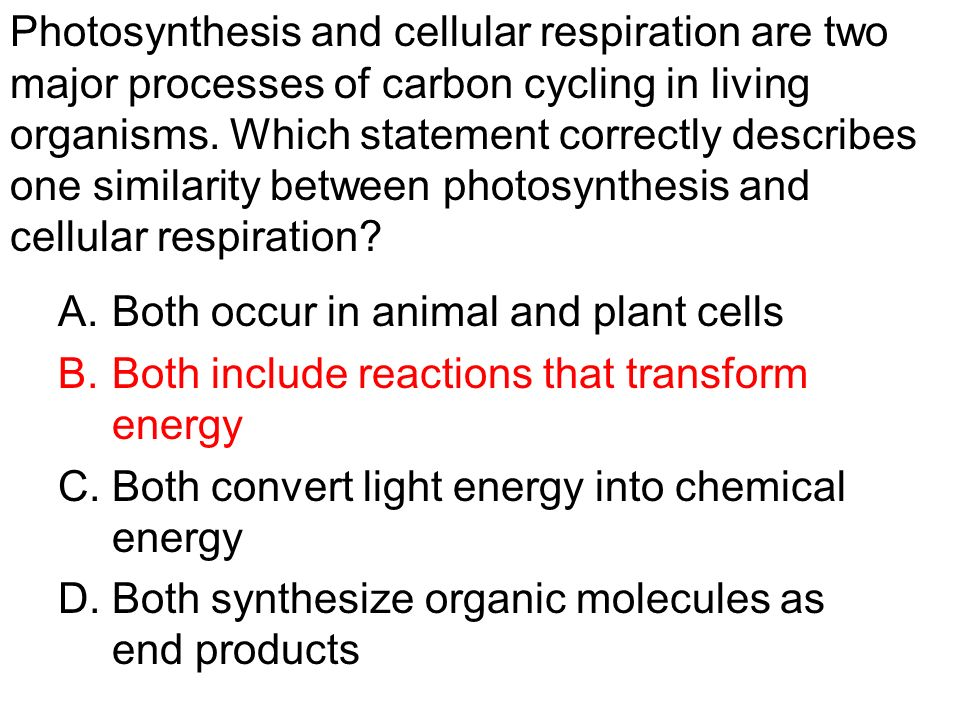 Relationships between plants and animals aqa essay