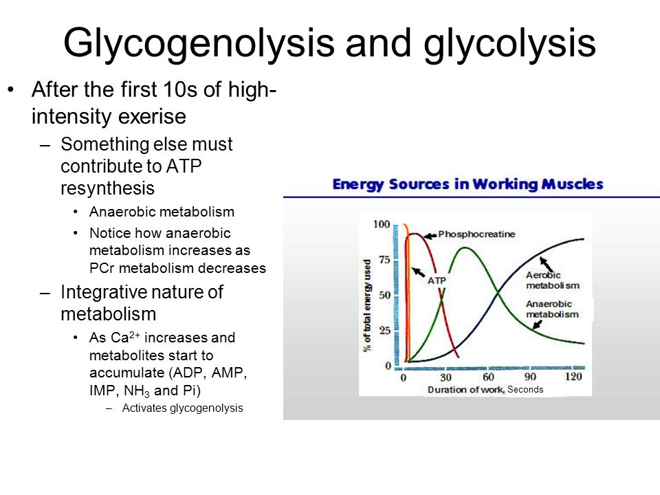 pcr resynthesis oxygen Bioenergetic systems are metabolic processes that relate  which involves oxygen from the  the energy for atp resynthesis comes from three different series of .