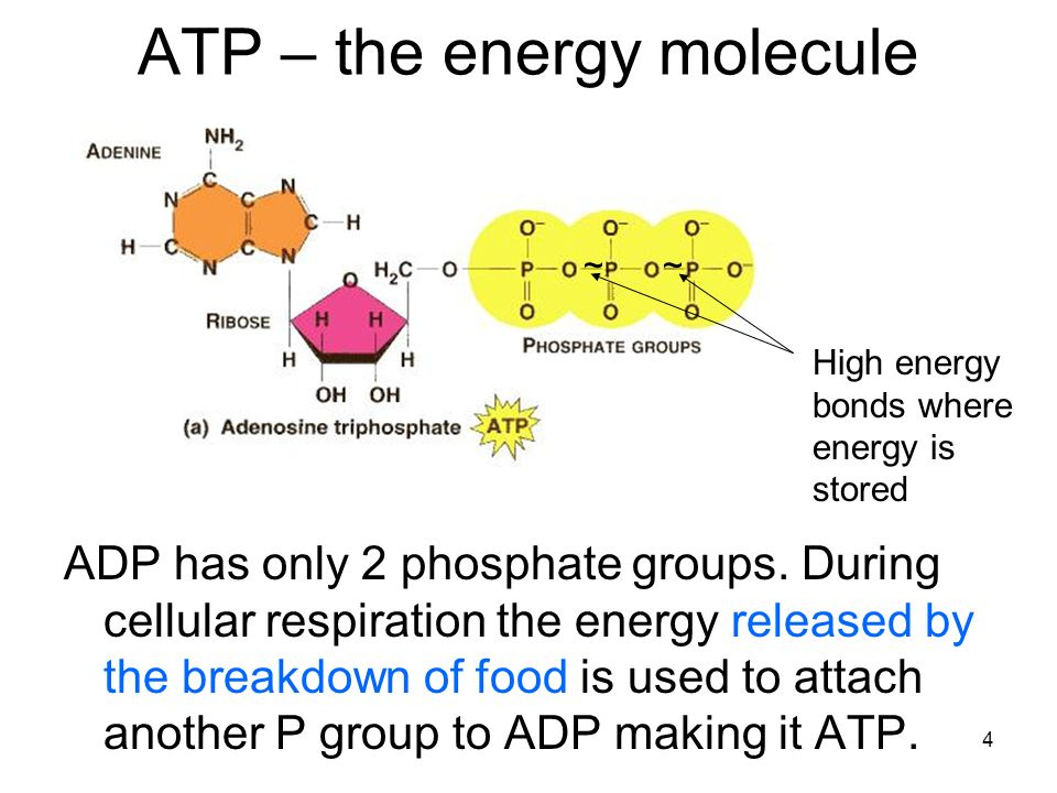 how to know if a molecule has phosphate