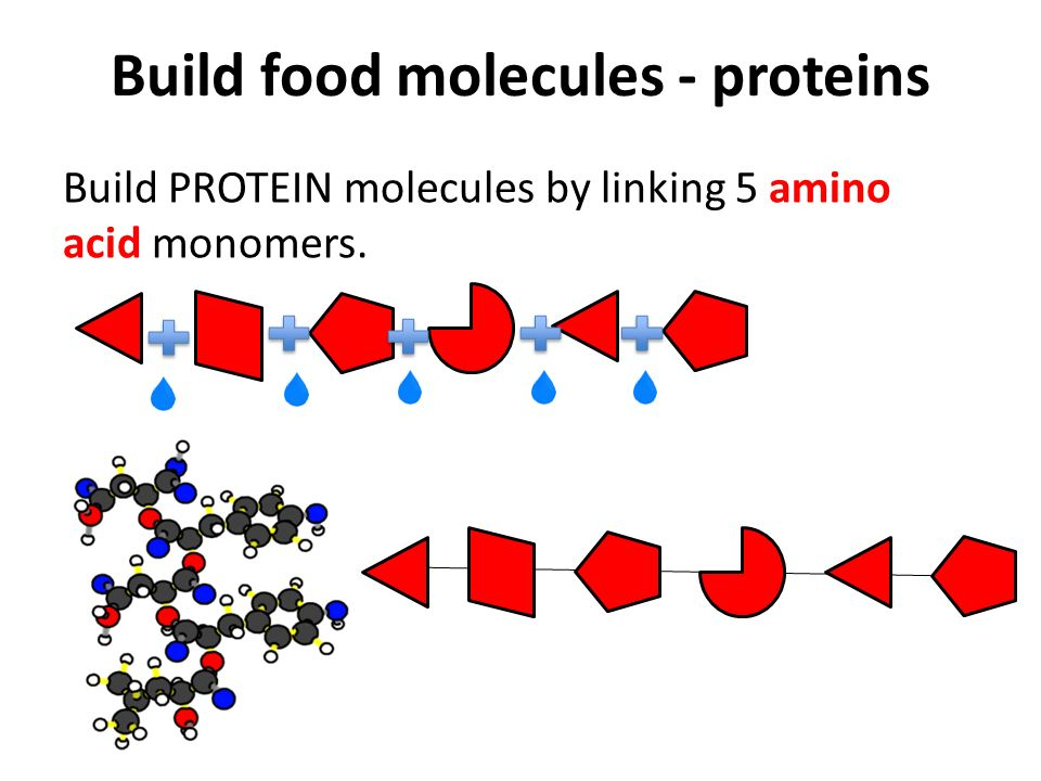 the four basic food molecules There is a wealth of information about food and cooking all measurements in a recipe can be reduced these four the atoms in the basic molecules of food can.
