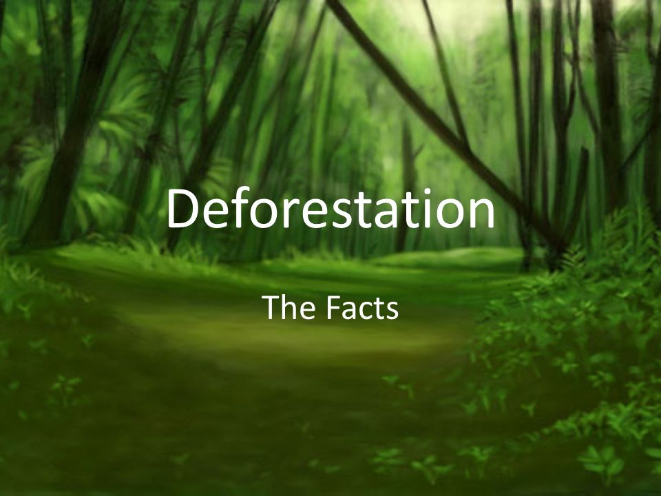 the facts and concerns of deforestation Deforestation facts for kids deforestation is when forests are converted for other purposes by cutting down the trees to clear the land for other use.