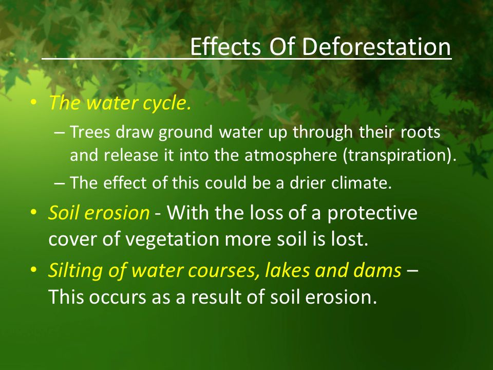 Deforestation and Its Extreme Effect on Global Warming