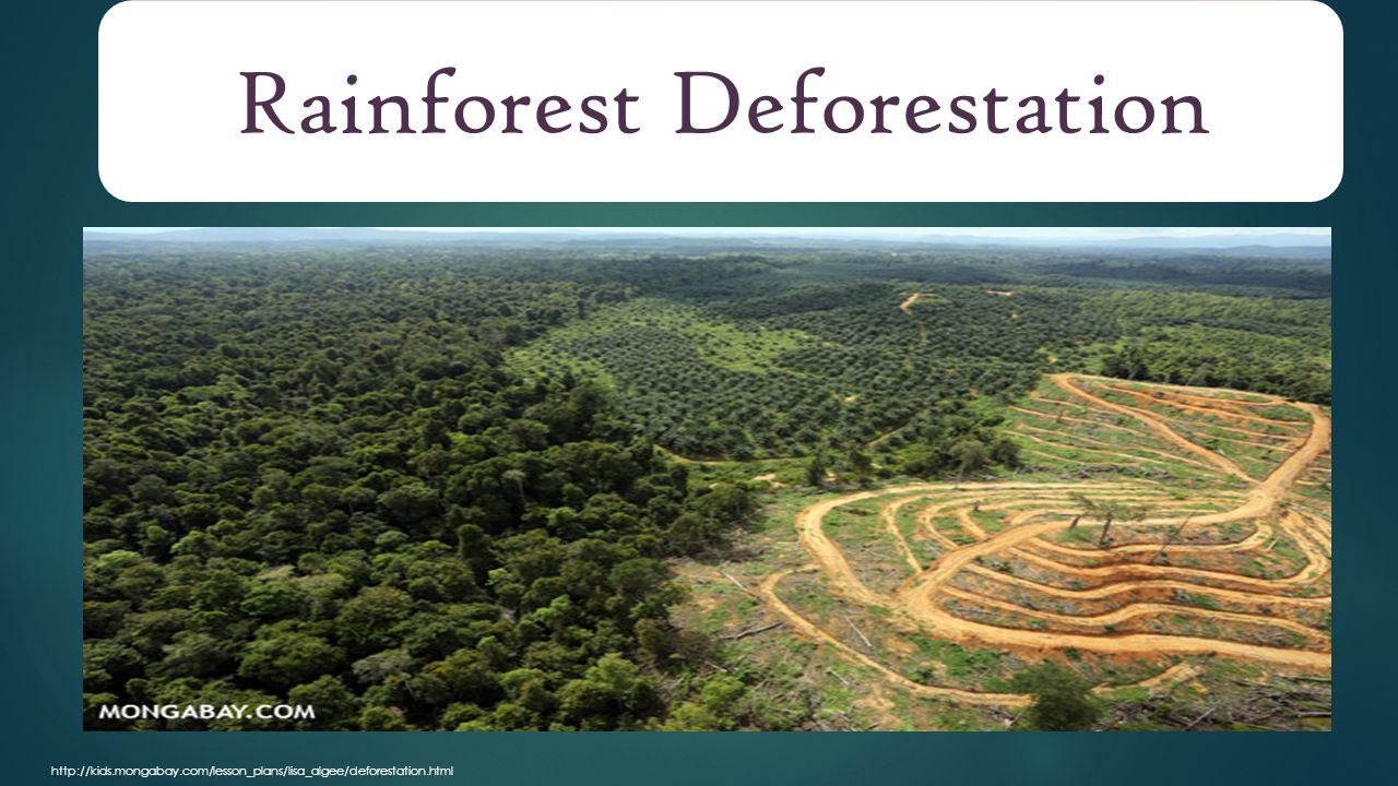 exploring the impact of deforestation Impact of deforestation on climate change wwwiosrjournalsorg 26 | page change the unfccc (united nations framework convention on climate change) held.